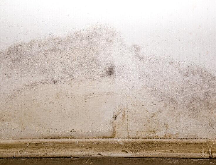 mold-damage-img1