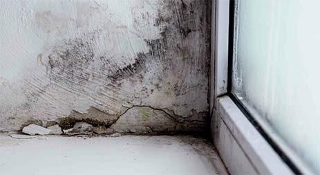 mold-damage-thumbnail