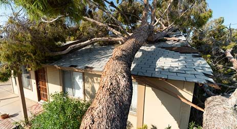 storm-damage-thumbnail